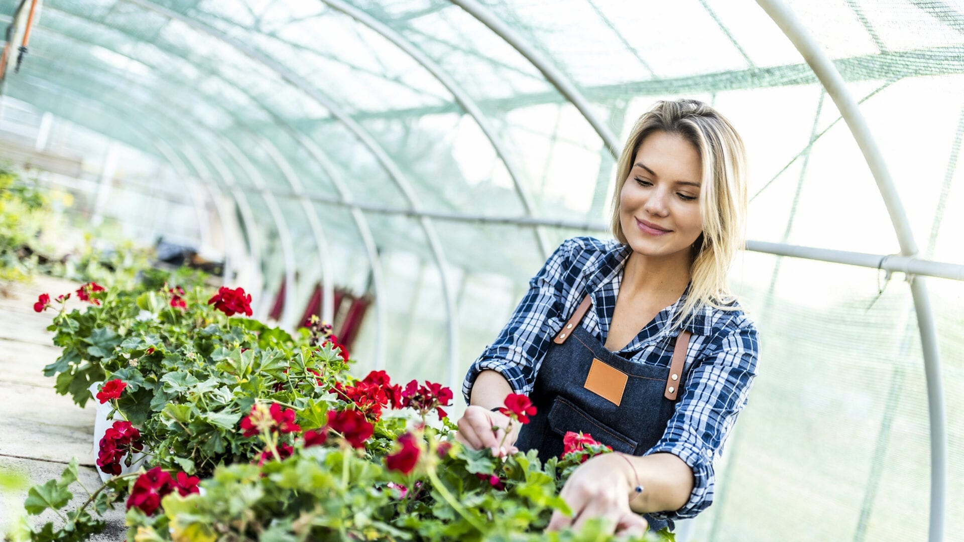 Woman pruning plants in a greenhouse